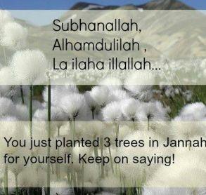 """Subhanalah  Alhamdulilah . La ilaha illalah"" - You Just plantes 3 trees in Jannah Keep on saying"