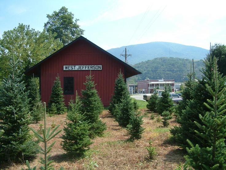 Christmas Tree Farm In Nc