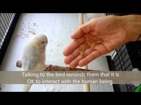 How the hec can i make my parakeets to shut up?