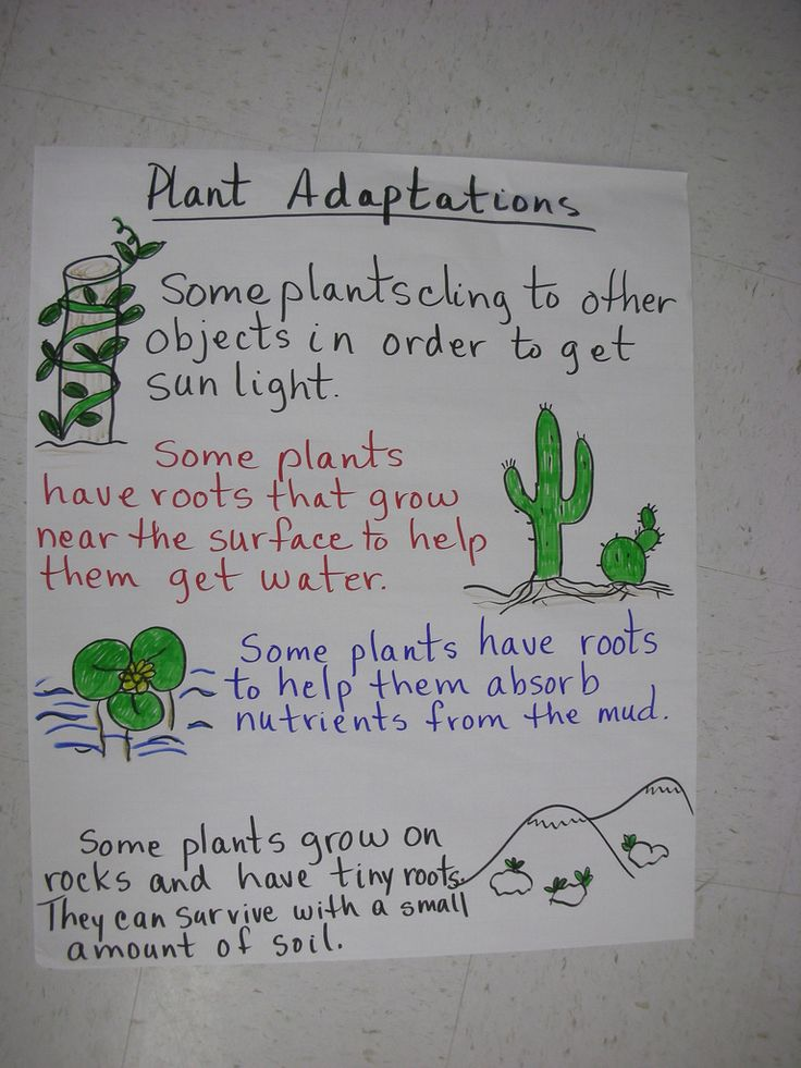 plant adaptations   this could be helpful next week