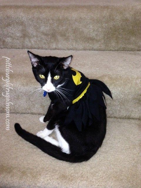 petsmart halloween costume batgirl halloween pets cats - Halloween Costumes For Kittens Pets