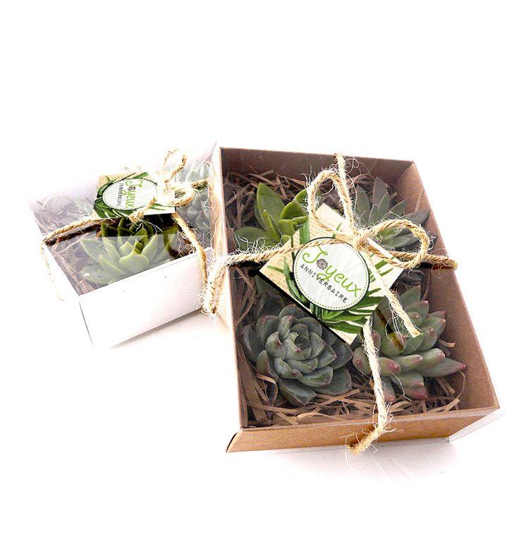 Les 11 meilleures images du tableau les contes de papier par les contes succulents sur pinterest - Mini plante grasse mariage ...