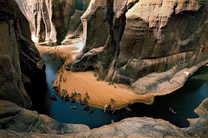Unta-unta kaum nomaden Bideyat sedang minum di mata air Archei di massif Ennedi. (Tchad, Sahara)