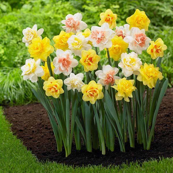 братанов профессиональный названия цветка с луковицей с картинками фоменко поперли