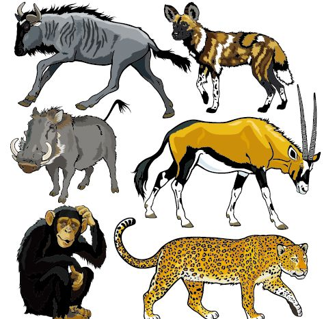 Vector set of wild animals design graphic 08 free