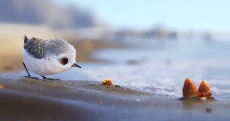 Pixar's New Short Film 'Piper' Is The Most Adorable Thing Ever And You Can Watch It For FREE | Bored Panda