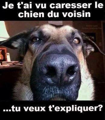 Heureusement qu'il ne m'a pas vu avec le chat ... #chien #dogsoftwitter