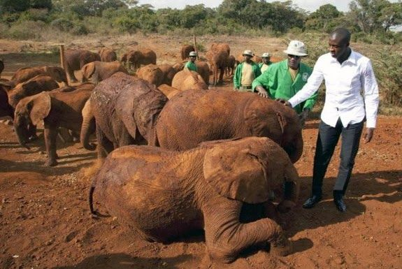 Yaya Touré to help save elephants as UNEP goodwill ambassador