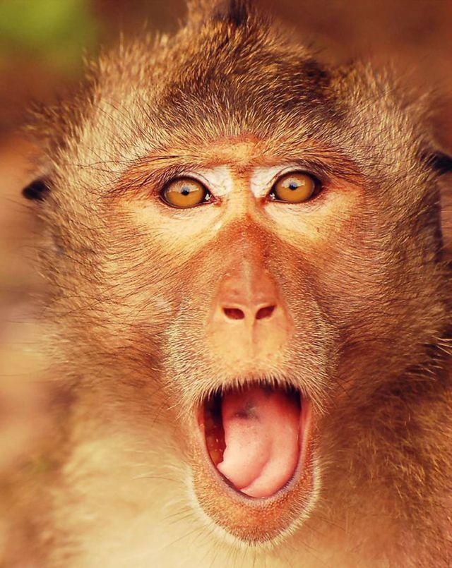 Vicces fotók: 20 állat, aki nagyon meglepődött