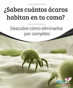¿Sabes cuántos ácaros habitan en tu cama? Descubre cómo eliminarlos por completo  Si bien solemos ignorarlo, algunas alergias, infecciones y problemas de las vías respiratorias tienen que ver con los ácaros y bacterias que se proliferan en este.