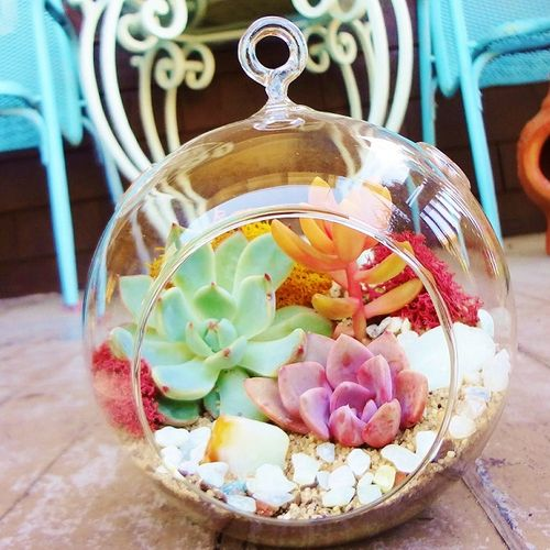 In this fun, one and half hour Succulent Terrarium workshop, you'll get your hands dirty while learning all about how to design with and care for #succulents.
