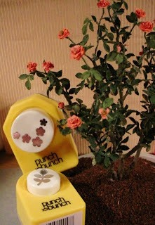 miniature rosebush how-to