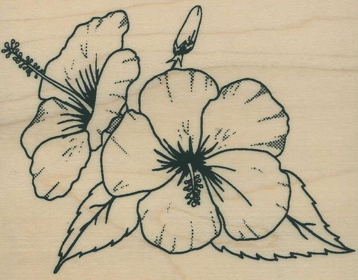 hibiscus outline - Google Search