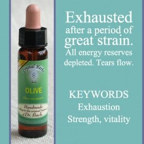 Bach Flower Remedy - Olive