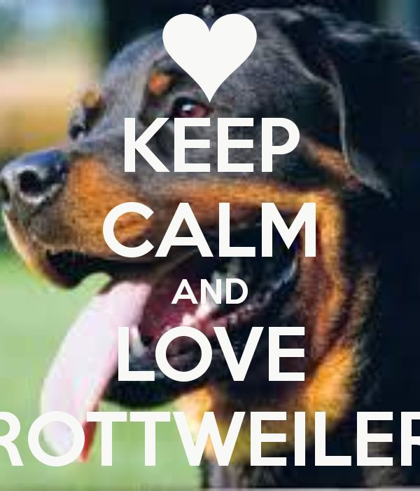 keep calm and love rottweiler - Google Search