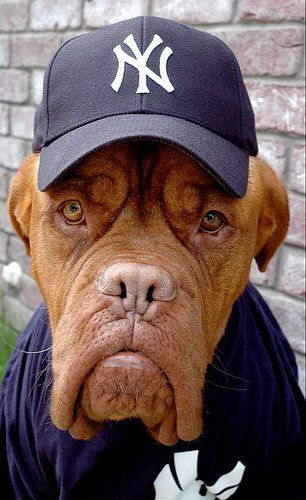 #Dogue #De #Bordeaux, strike three your out!!