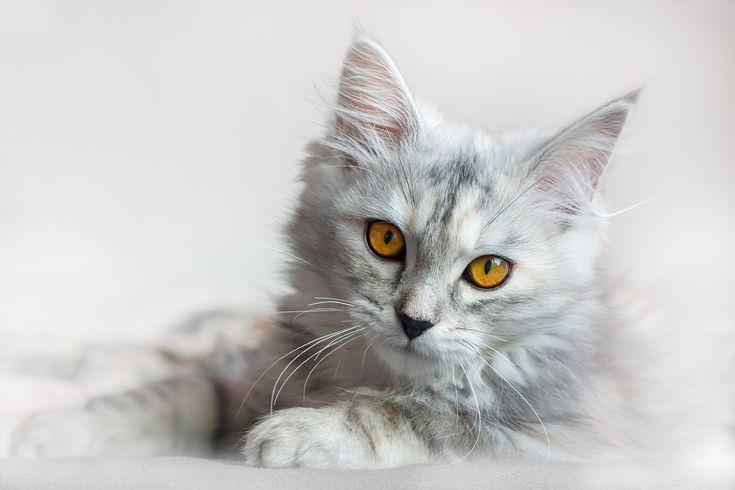 """Vinia""  Katze, cat, kitten  .  Animal Photography Artwork"