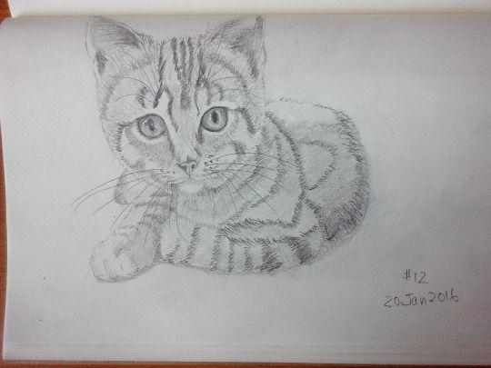 Cat sketching practice #012