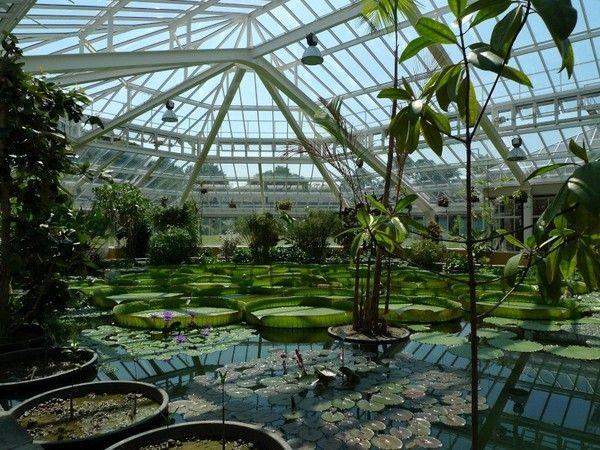 35 best jardin botanique de meise images on pinterest. Black Bedroom Furniture Sets. Home Design Ideas