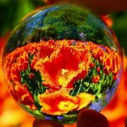As imagens da bola de cristal Veja aqui: http://www.hierophant.com.br/arcano/posts/view/Nina/2313