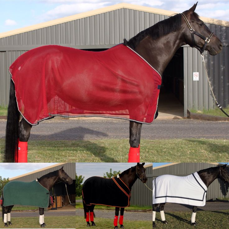 The City Barn are the proud distributor of Gruener Germany. If you are searching for the very best in craftsmanship and materials then look no further. The quality has to be seen to be believed! We have supplied large Equestrian Victoria events with these rugs from Melbourne Horse Trials, Boneo CDI, Dressage and Jumping with the stars etc. These rugs are the very best money can buy. We are also able to organise customisation to ensure the rugs meet your exact needs.