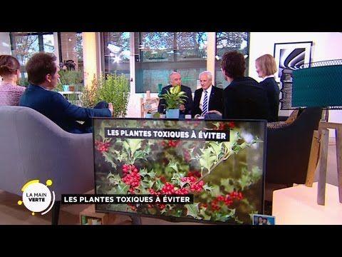 Des plantes pour purifier l'air de la maison - YouTube