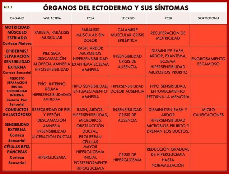 ORGANOS Y SUS SINTOMAS 1