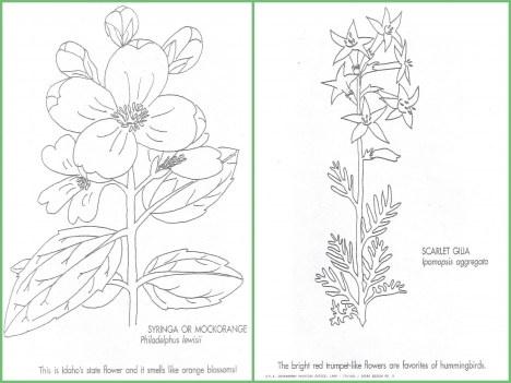 Wildflower Coloring Books Idaho