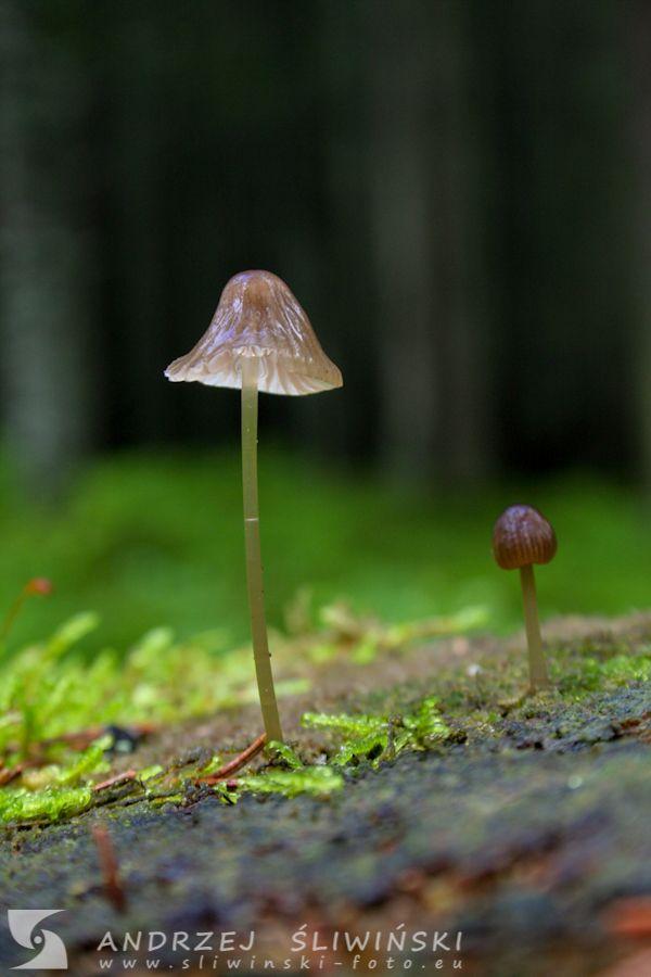 Mushroom on the log.  #macrophotography