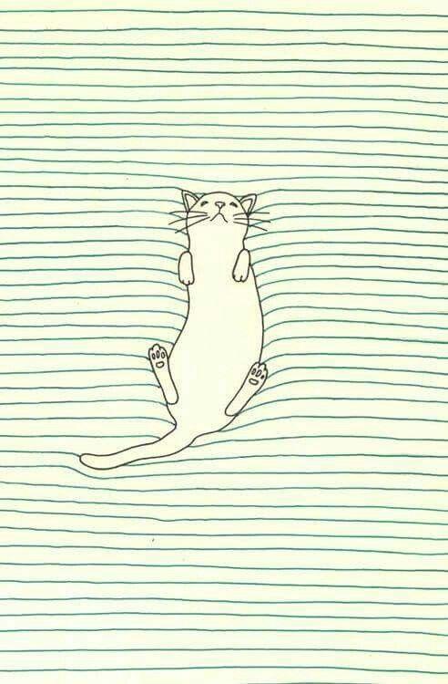 Fondos de pantalla gato