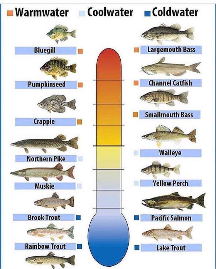 fishingtips #icefishing #muskie #trout #perch #sunfish