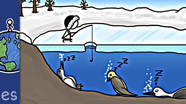 Genial vídeo sobre la migración de las aves y los métodos científicos para conocerla¿Pájaros que hibernan en lagos?!