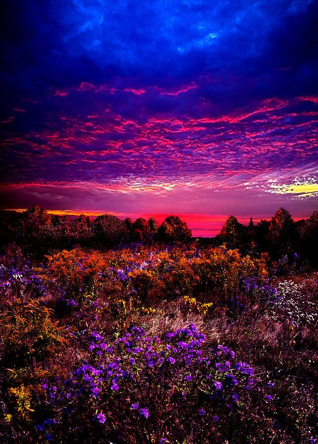Wow - Once in a Lifetime! by Phil Koch: Philkoch, Purple Sunsets, Color, Art Prints, Places, Landscape, Phil Koch, Photo, Flower