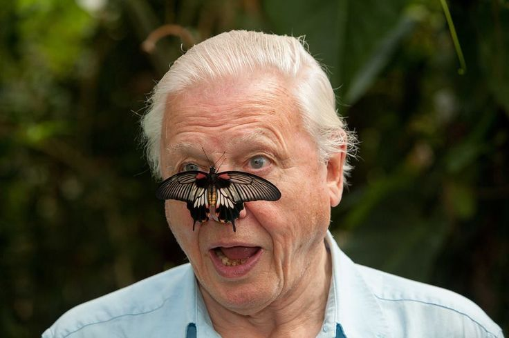 Butterfly Conservation. Our President Sir David ...