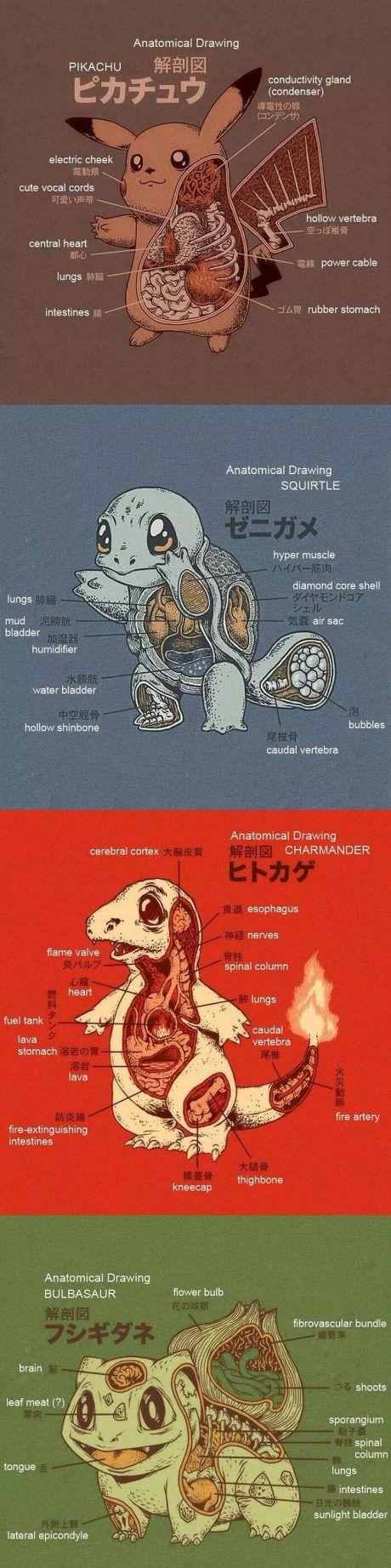 For those of you wondering here the anatomy of the first generation. (Ryan Mauskopf)