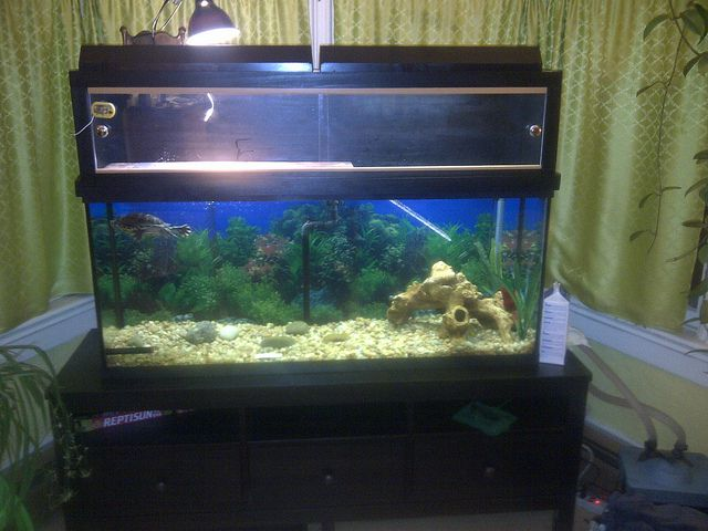 58 Best Images About Turtle Tank Ideas On Pinterest