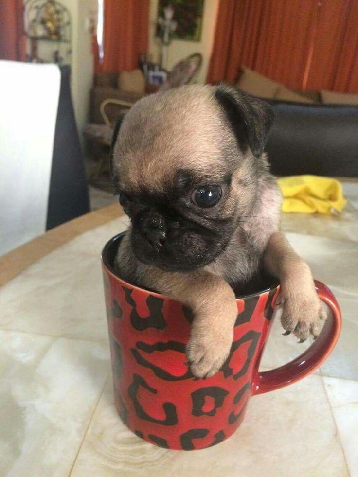 Snug as a pug in a mug
