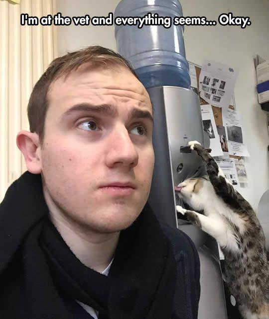 #2 Cat is weird in vet...