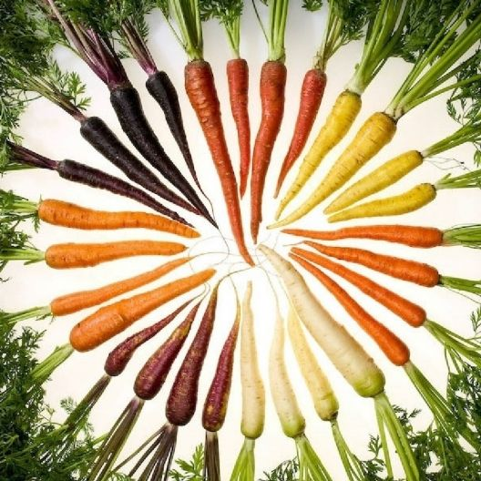 Grow Organic Heirloom Carrots - Plant Organic Rainbow Blend Carrot Seeds:Grow a colorful and delicious vegetable garden! Our Organic Rainbow Carrot Blend contains 4 different varieties of carrot seeds: Organic Lunar White Carrots, Organic Solar Yellow Carrots, Organic Cosmic Purple Carrots & Organic Atomic Red Carrots. With names and colors like that, your garden will be out of this world!