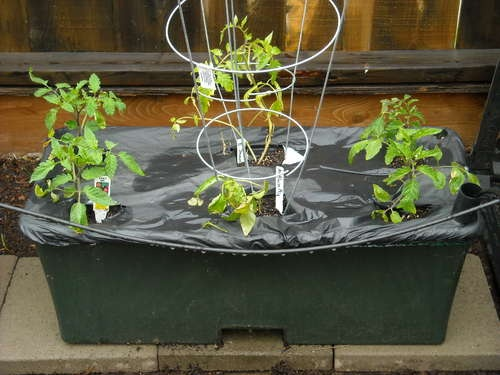 Ultimate Vegetable Quot Earthbox Quot For Cheap Terahydro