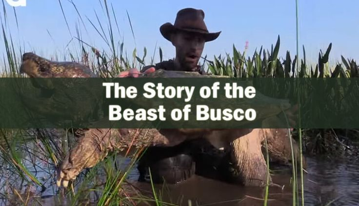 The Beast of Busco is somewhat of a legend in Churubusco, Indiana. The legend revolves around an enormous snapping turtle which citizens saw around 1949.