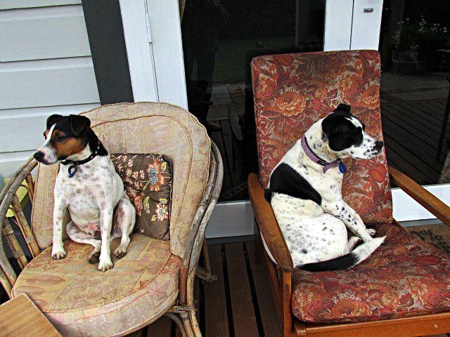 Mollie and buddy Floyd.