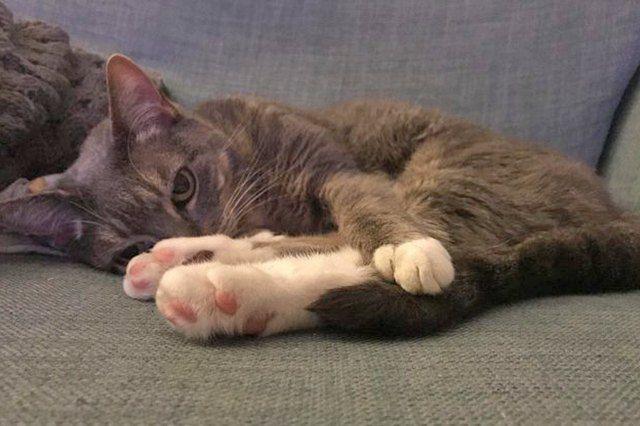 Bitte genießen Sie diese 20 perfekt rosa Fotos von Kitty Toe Beans | Niedlichkeit   – Adorable Kittens & Other Animals
