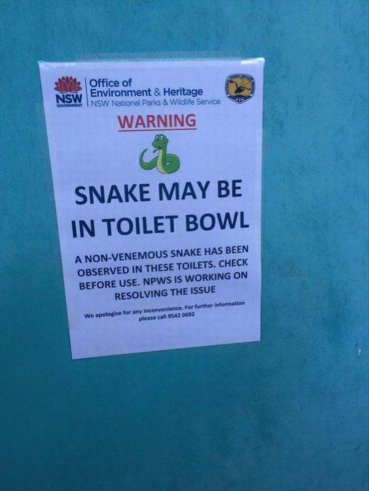 Warning: Snake will die from shotgun blast. Just sayin'...