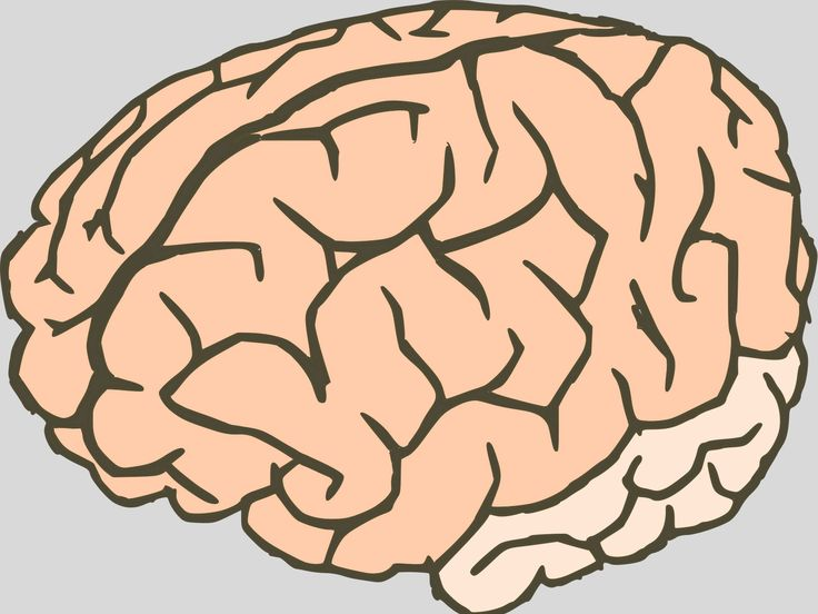 Human Brain Outline ppt backgrounds