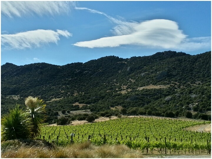 16/12/12 view over the Pinot Noir ...