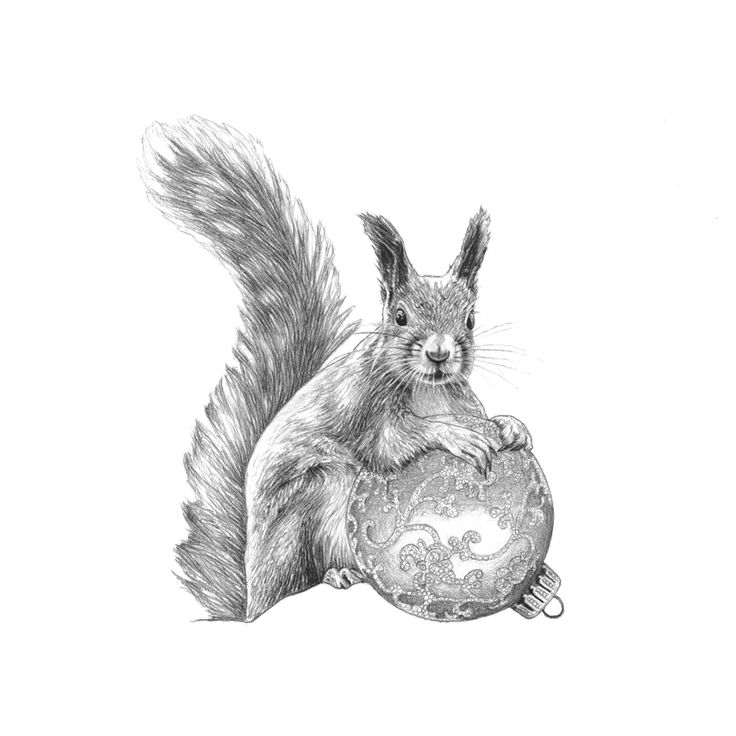 Christmas squirrel. Christmas card made by www.illustratemyday.com