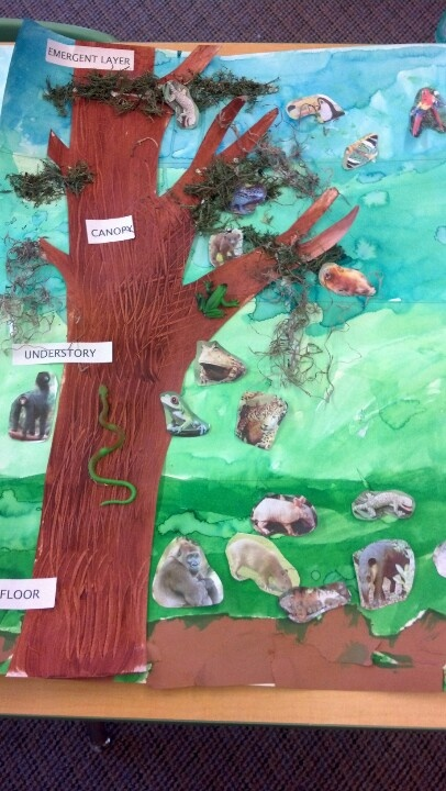 Four levels of the Rainforest for Wonders of the Rainforest Unit. Paint the four layers,  paint tree, glue paper animals and tree onto poster, have children glue moss and label each layer and lastly, hot glue plastic rainforest animals!