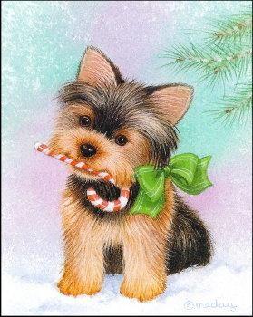 Yorkie Christmas Cards