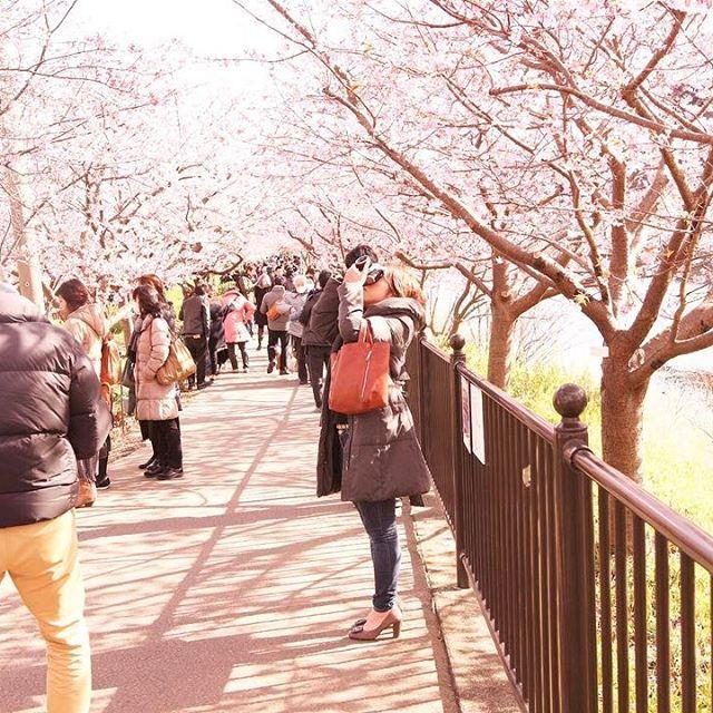 【kt19910810】さんのInstagramをピンしています。 《* ・ ・桜舞い散る中でお花見したい🌸 ・とりあえず飲みたい🍻 -------------------------------------------- #ファインダー越しの私の世界 #写真撮ってる人と繋がりたい #写真好きな人と繋がりたい #ppschool #カメラ男子#カメラ好きな人と繋がりたい #写真部 #東京カメラ部 #カメラ部#カメラ好き #tokyocameraclub #bestjapanpics #カメラ日和#igersjp#camera#as_archive#icu_japan#instagram#instadaily#instagood#team_jp_#team_jp_東#photooftheday#pics_jp#lovers_nippon#art_of_japan#indies_gram #phos_japan #tagsforlikes #桜 --------------------------------------------》